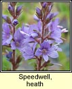 speedwell,heath (lus cré)