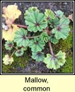 mallow,common (lus na meall muire)