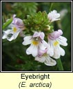 eyebright (glanrosc)