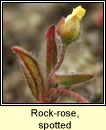 Rock-rose, spotted (Grianrós breac)