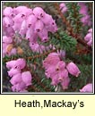 Mackay's Heath