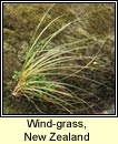 wind-grass,new zealand